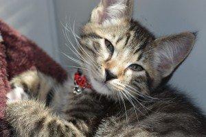 kitten-1155236_960_720